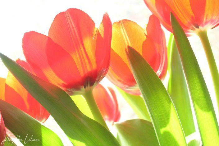 Naturfoto einer Blüte in der Natur, nature-art-naturfotografie-blumenfotografie-photoart-natureart